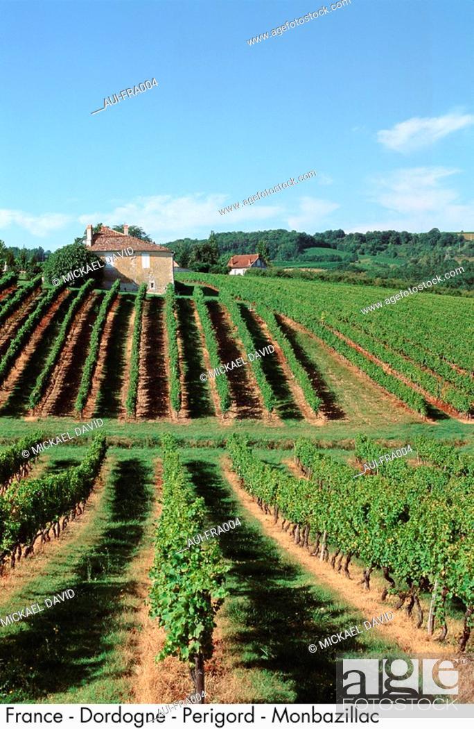 Stock Photo: France - Dordogne - Perigord - Monbazillac.