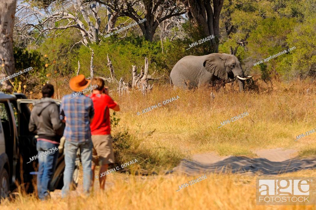 Stock Photo: Group of tourists outside vehicles, Moremi, Botswana, Africa.