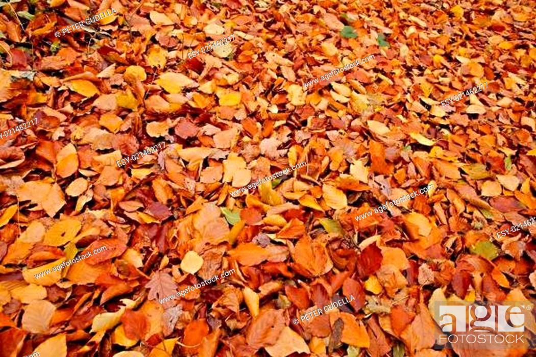 Photo de stock: Fallen leaves.