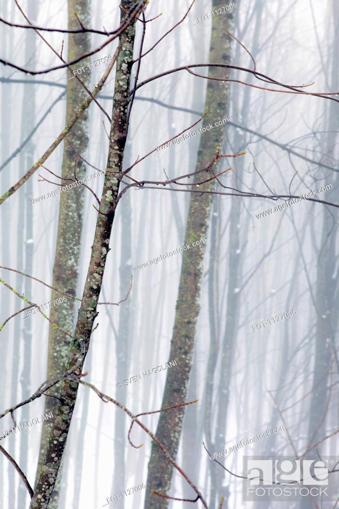 Stock Photo: Hazy winter forest.