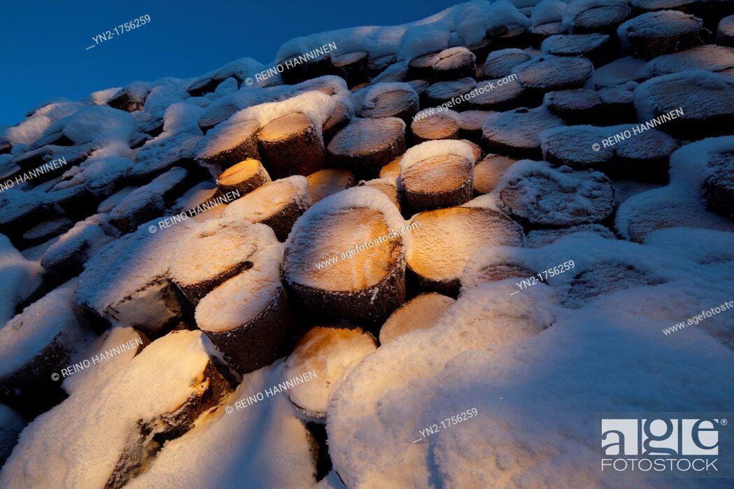 Stock Photo: Snow covered spruce, picea abies, logs  Location Suonenjoki Finland Scandinavia Europe.