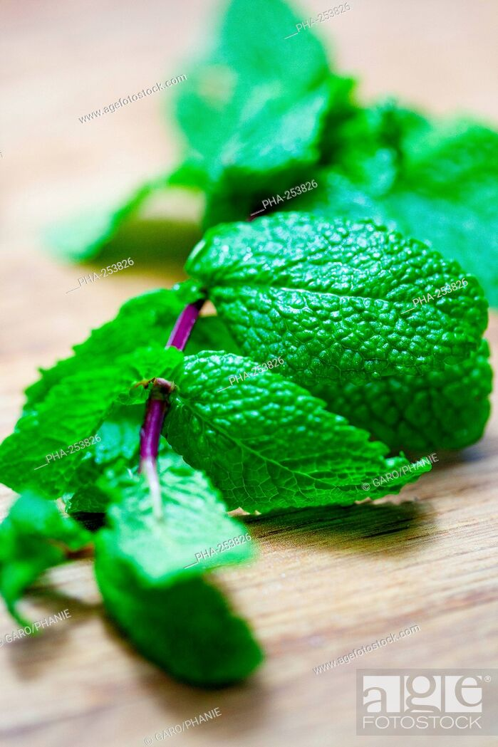 Stock Photo: Mint leaves.