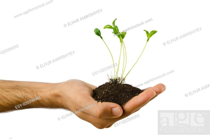 Stock Photo: Green seedling in the hand.