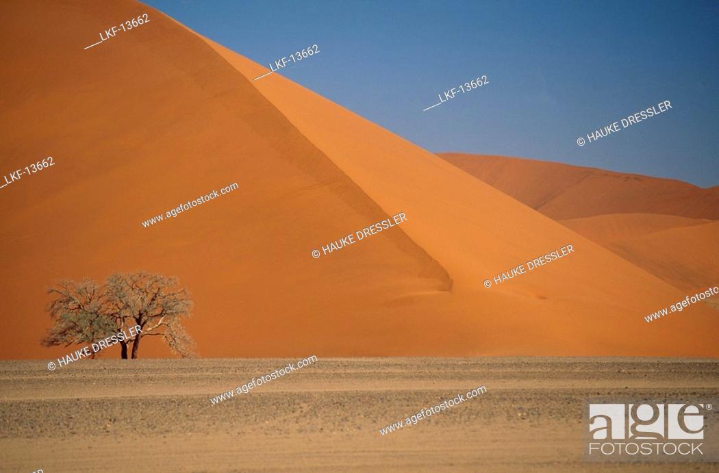 Dune 45 Sand Dunes At Sossusvlei Sesriem Namib Desert