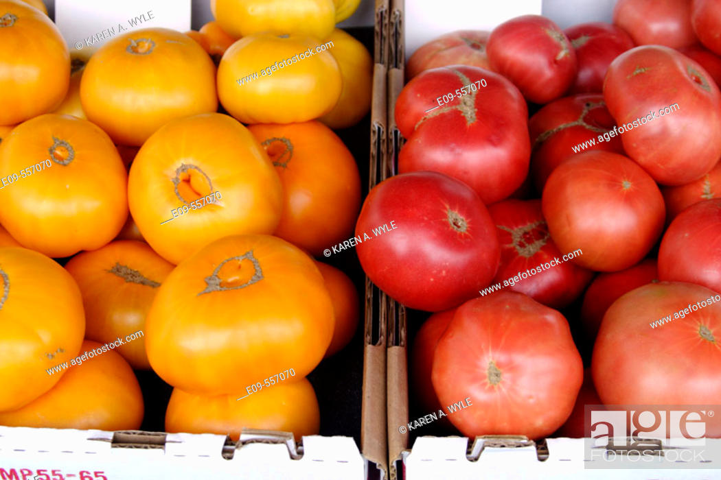 Stock Photo: Yellow and red tomatoes in adjacent cartons at farmers' market in southern California, USA.