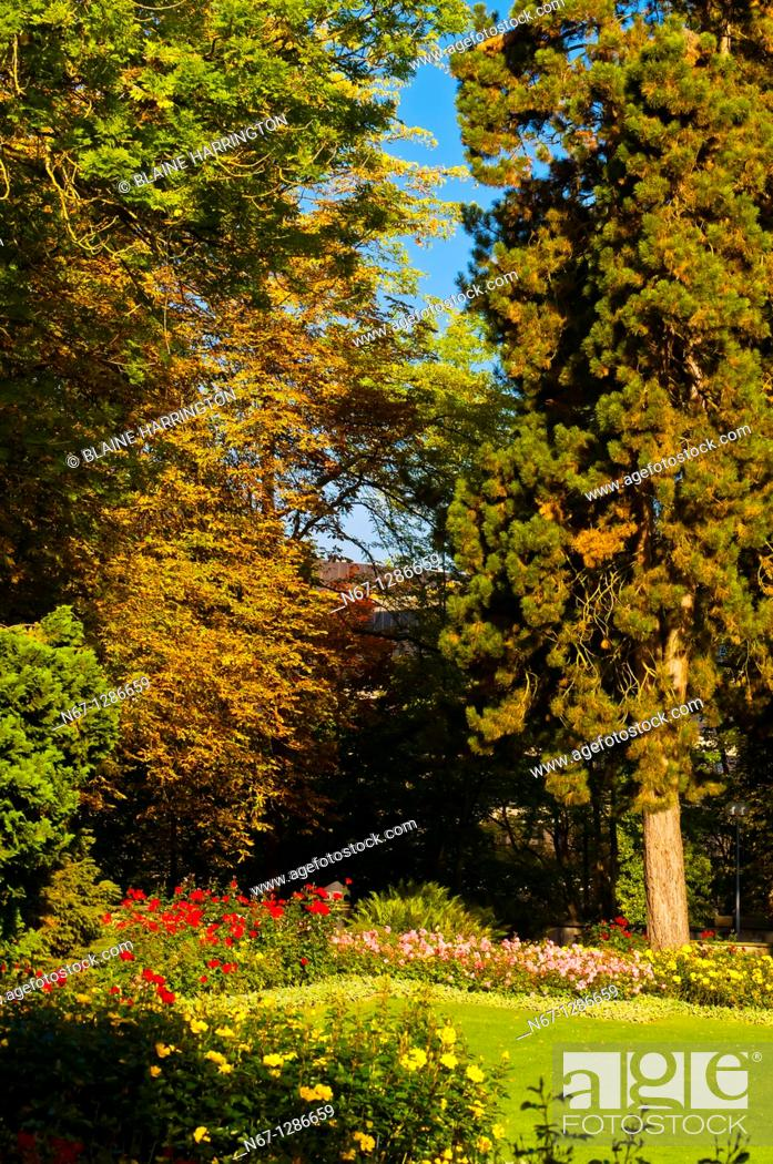 Stock Photo: The Rose Garden Rosengarten, Bern, Canton Bern, Switzerland.