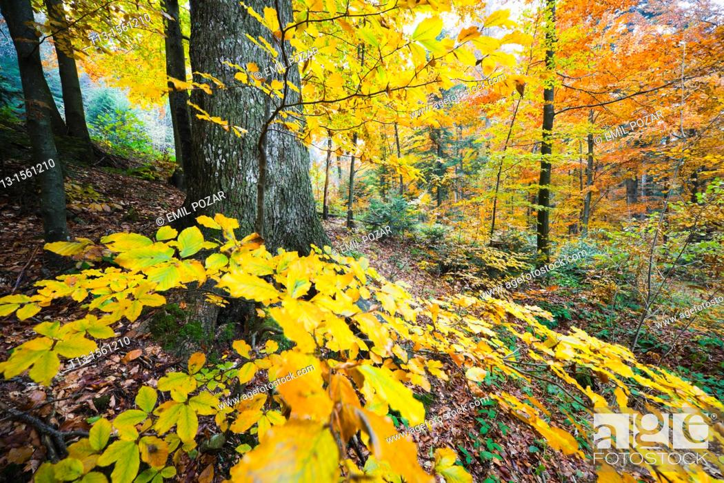 Stock Photo: Autumn in the forest, colorful leaves.