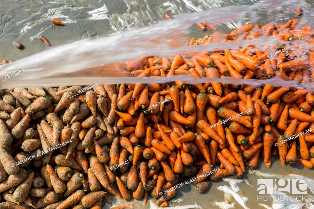 Stock Photo: Un-washed and dirty carrot washing on throw pipe water. Food background. Near Savar District at Dhaka, Bangladesh.