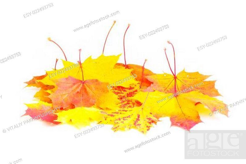 Stock Photo: maple leafs.