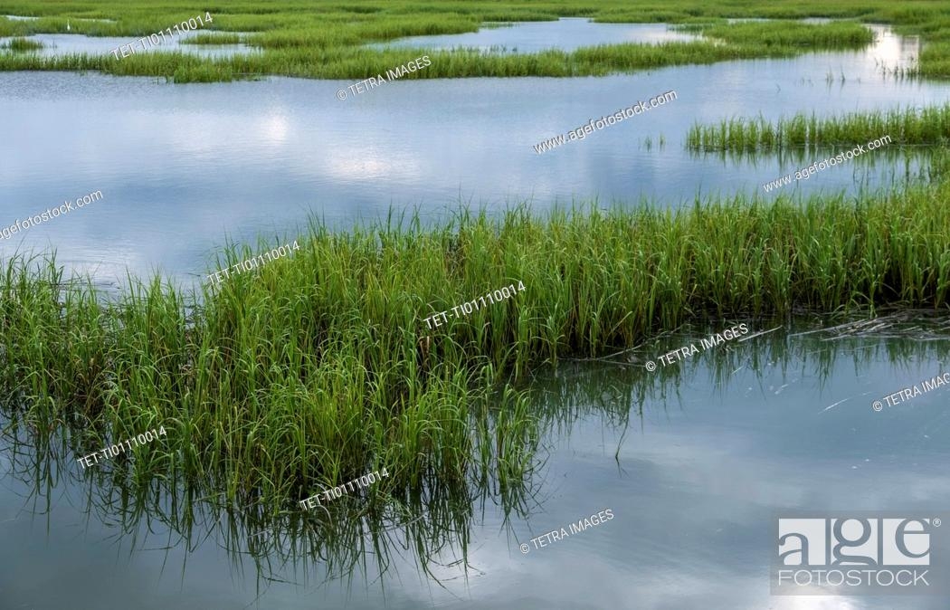 Stock Photo: Grass in pond.