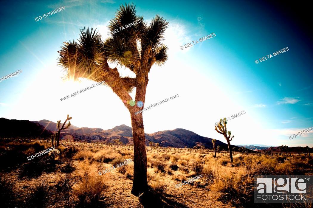 Stock Photo: Hidden Valley, Joshua Tree National Park, California, USA.