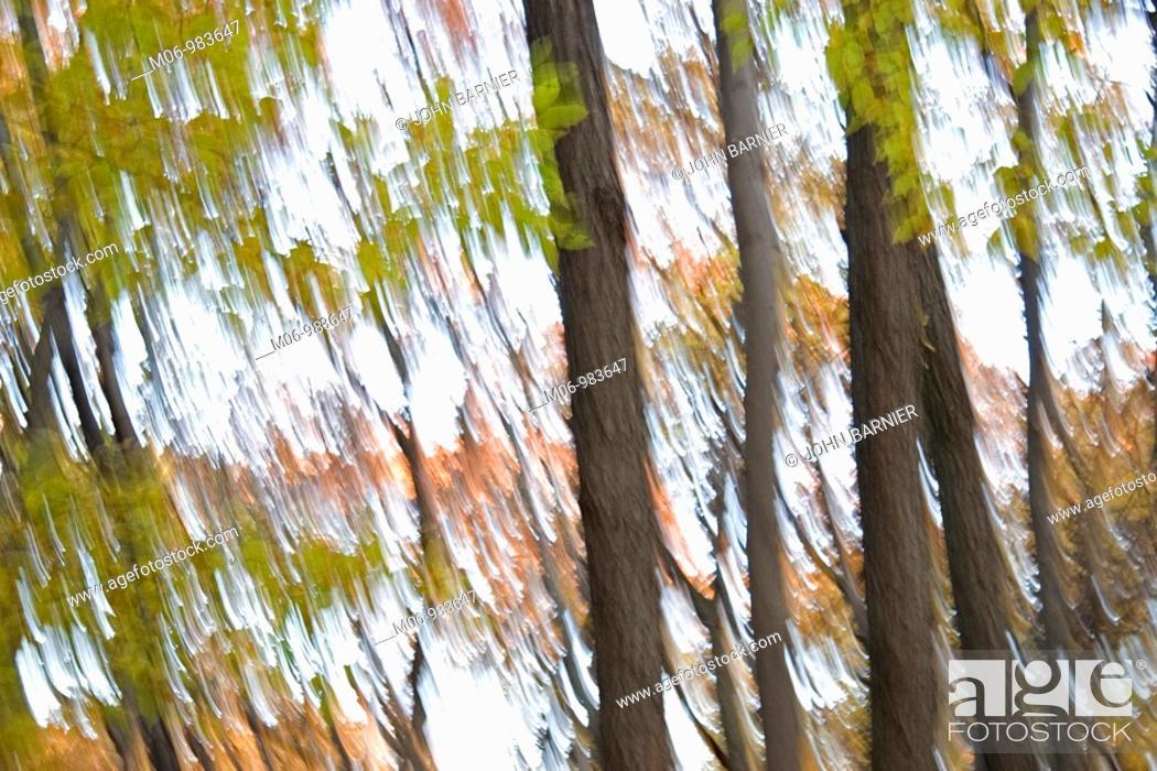 Stock Photo: Shakey nervous image of trees.