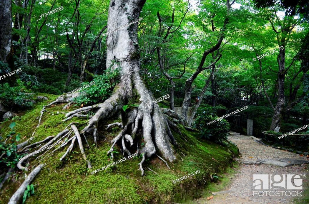 Stock Photo: Jojakko-Ji Temple, Arashiyama.