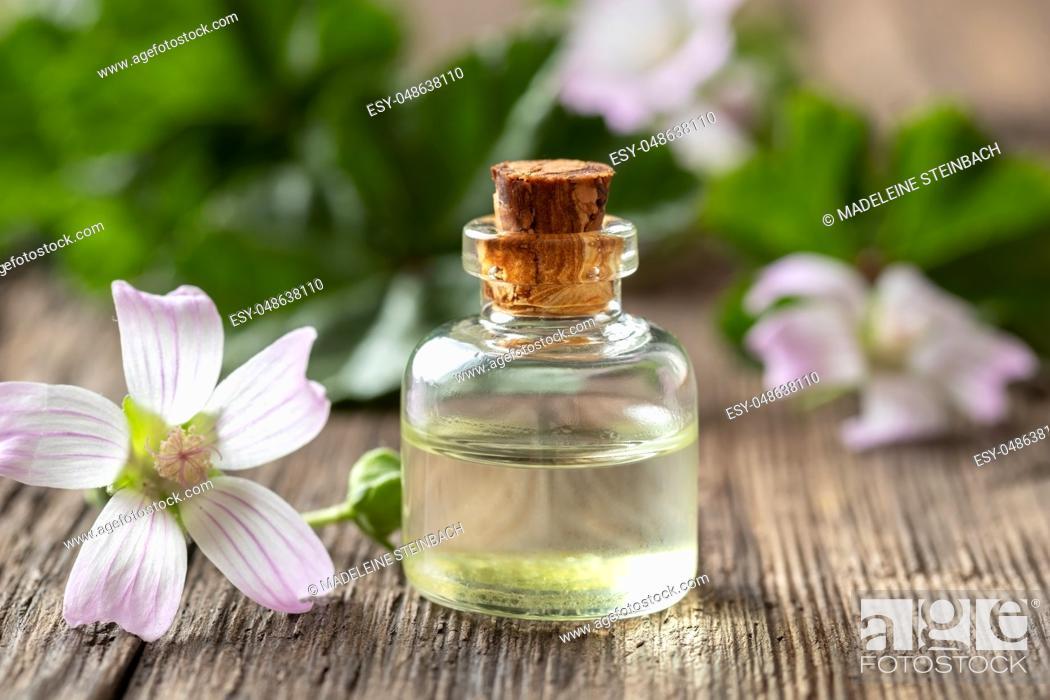 Imagen: A bottle of common mallow essential oil with fresh malva neglecta plant.