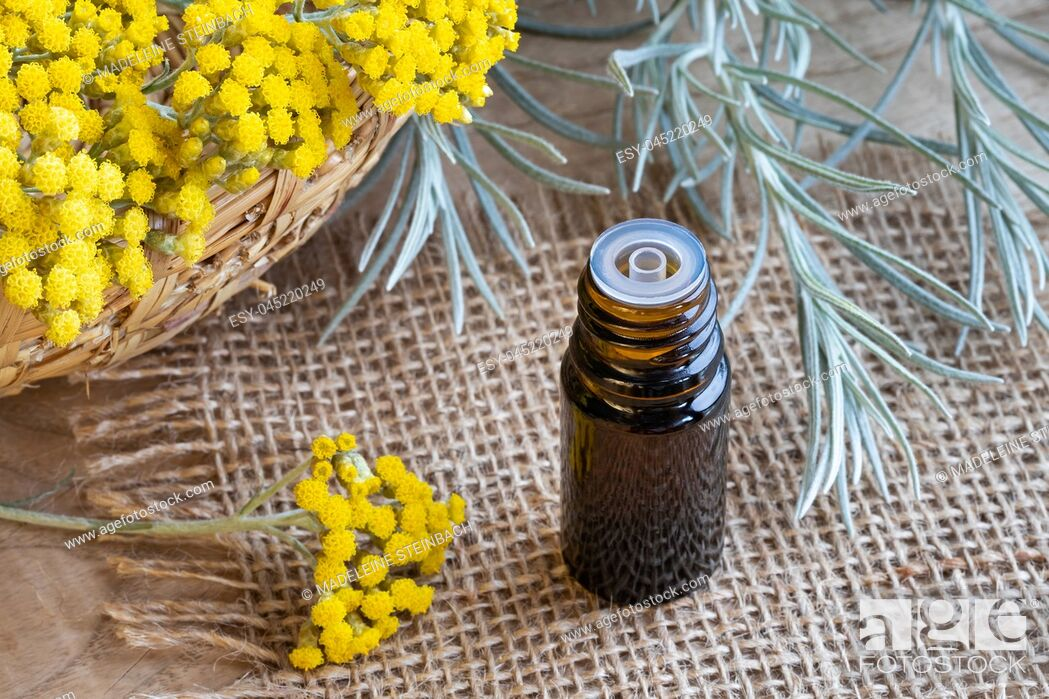 Stock Photo: A bottle of essential oil with fresh blooming helichrysum italicum plant.