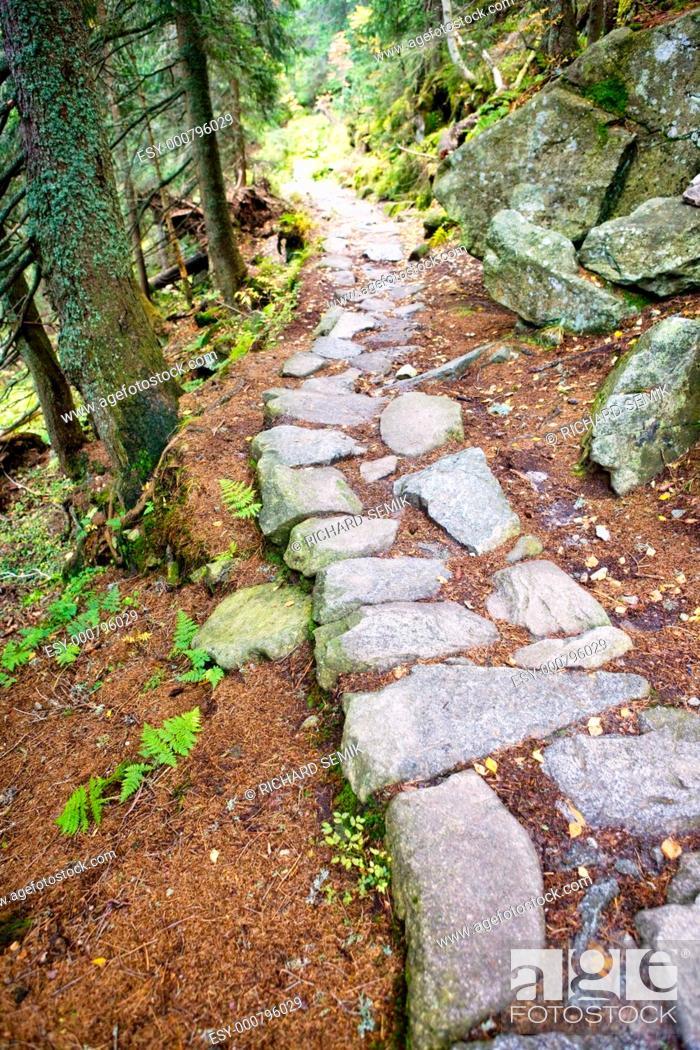 Stock Photo: path in Vysoke Tatry High Tatras, Slovakia.