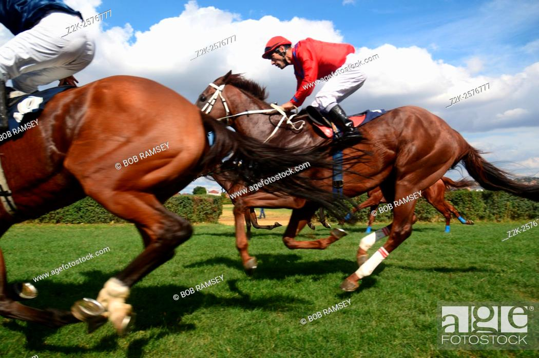 Stock Photo: Final Racehorse in Serbia, city of Pozarevac.