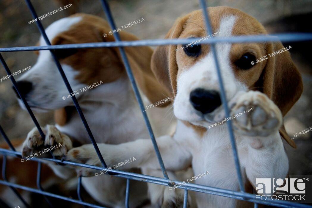 Stock Photo: Puppies.