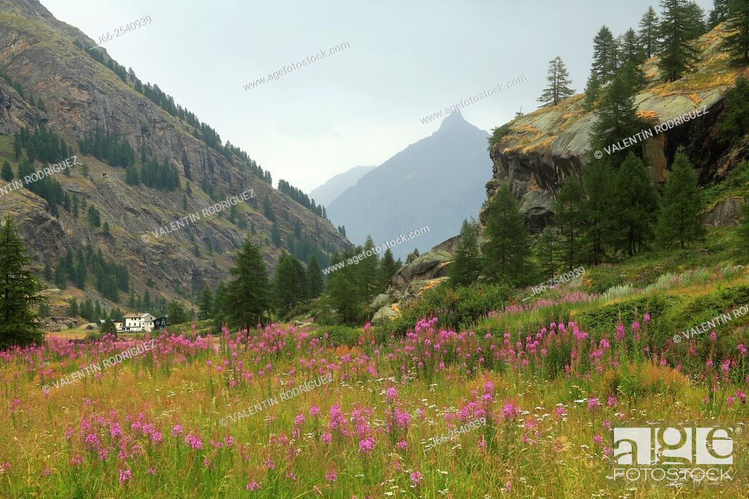 Imagen: Landscape near of Pont, in the Valsavarenche valley. National park Gran Paradiso. Italy.