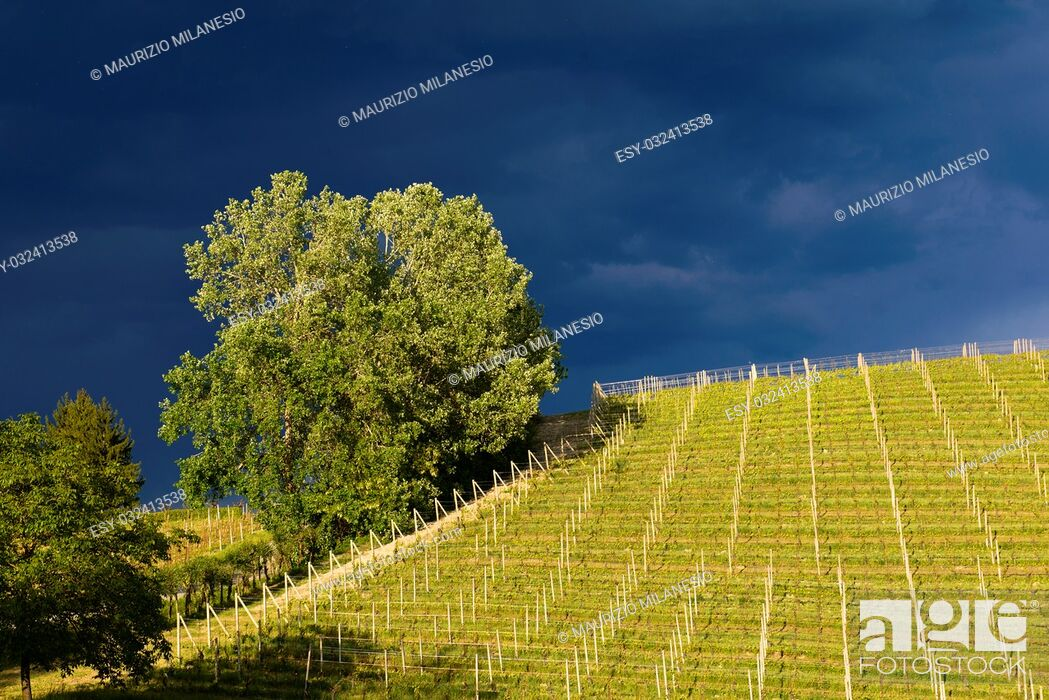 Stock Photo: View of vineyards and Langa hills during a thunderstorm, suggestive contrast between dark skies and vineyards illuminated by the afternoon sun.