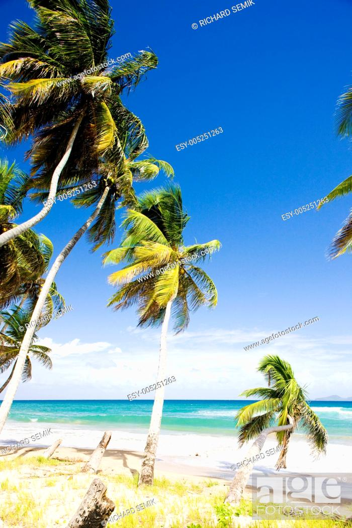 Stock Photo: Sauteurs Bay, Grenada.