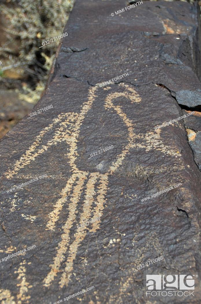 Imagen: Macaw petroglyph, Boca Negra Canyon, Petroglyph National Monument, Albuquerque, New Mexico, USA.