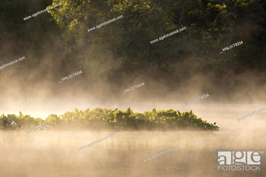 Photo de stock: river and water plants with fog, Rio Claro, Pantanal, Mato Grosso, Brazil.
