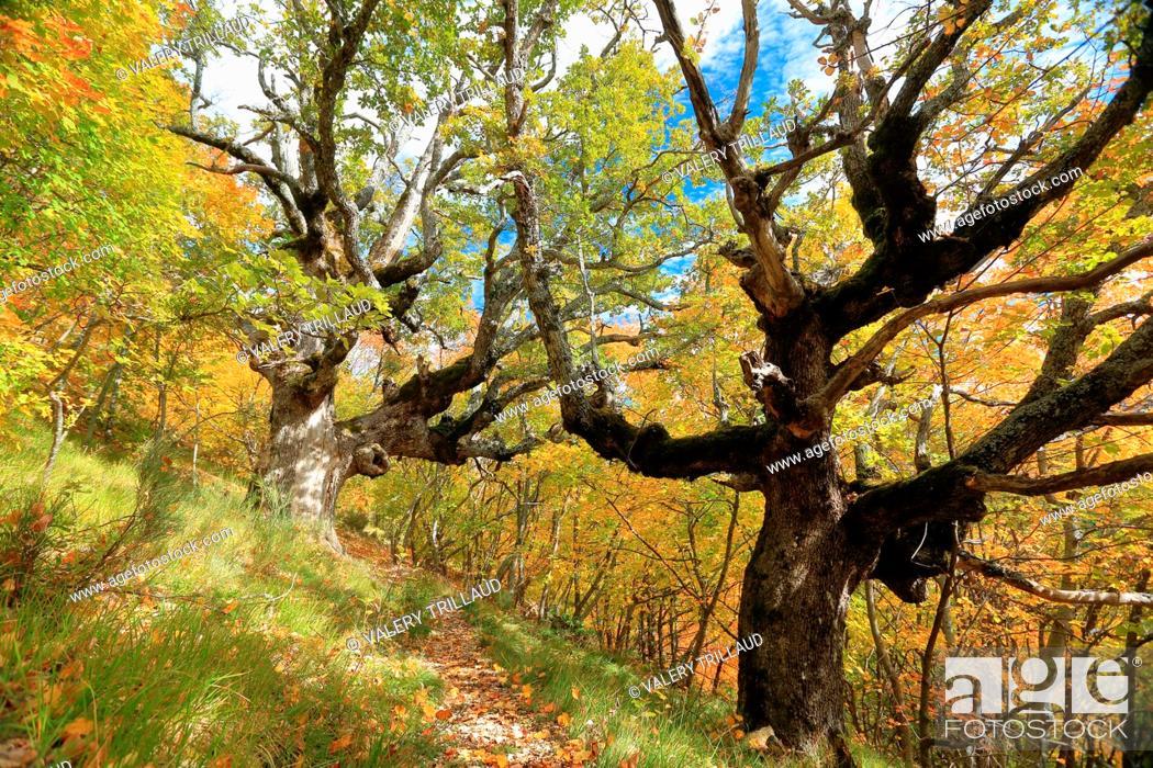 Stock Photo: Autumn colors, Parc naturel régional des Préalpes d'Azur, Alpes-Maritimes, 06, Cote d'Azur, PACA, France.