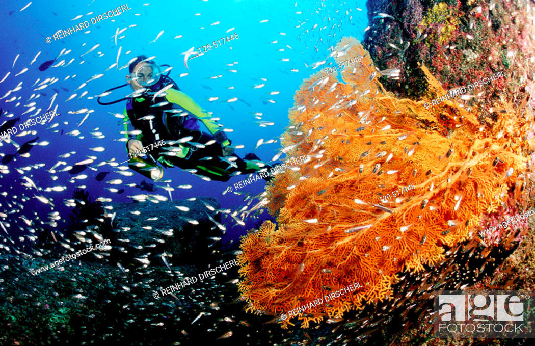 Stock Photo: Scuba diver and coral reef. Indian Ocean, Phuket, Similan Islands, Andaman Sea. Thailand.