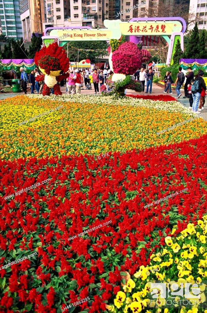 Asia China Hong Kong Flower Show Flower Flowers Colourful
