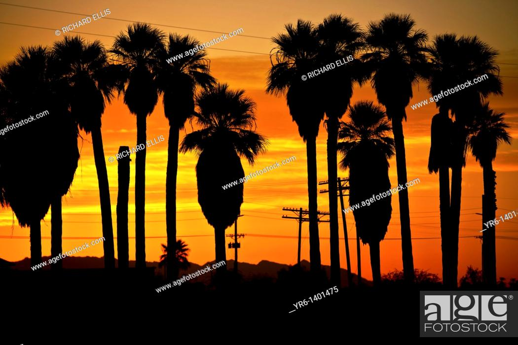 Stock Photo: Sunrise over palm trees along the coast of the Salton Sea Imperial Valley, CA.