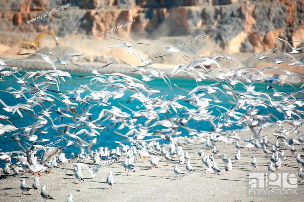 Stock Photo: many, seagulls, bird, flying, beach.