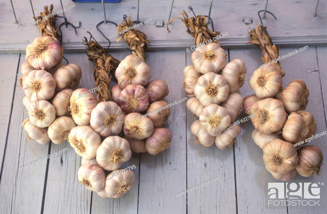 Stock Photo: Garlics. Sault, Provence, France.