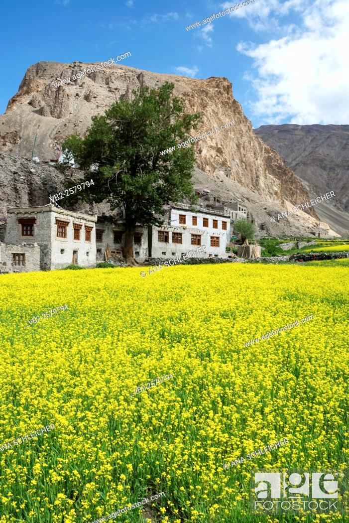 Stock Photo: Markha village. Trekking in Markha valley (Laddakh, India).
