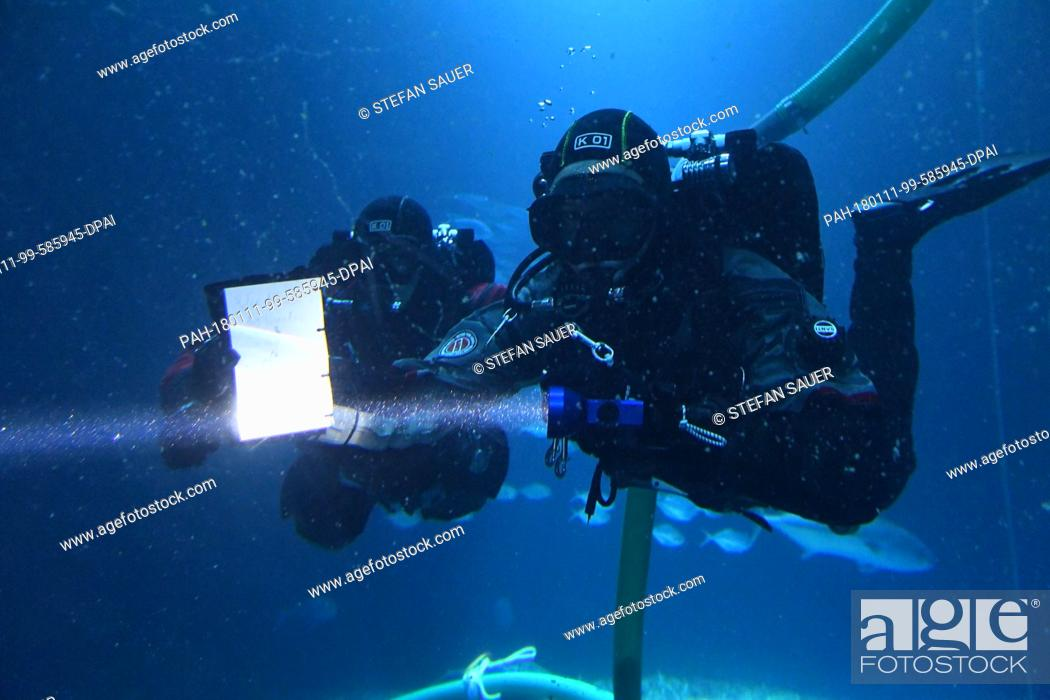 """Stock Photo: The divers Henning May and Andre Oetjen (L-R) clean the swarm fish tank """"""""Open Atlantic"""""""" with a suction pipe at the museum """"""""Ozeaneum"""""""" in Stralsund, Germany."""