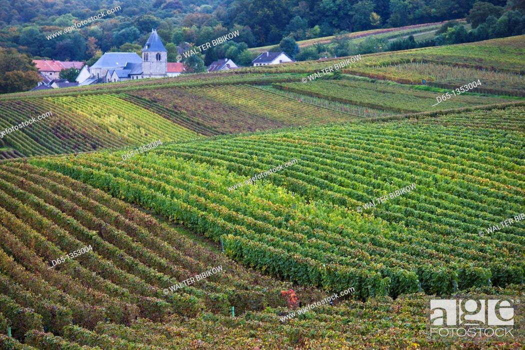 Stock Photo: France, Marne, Champagne Ardenne, Chigny-les-Roses, vineyard, autumn.