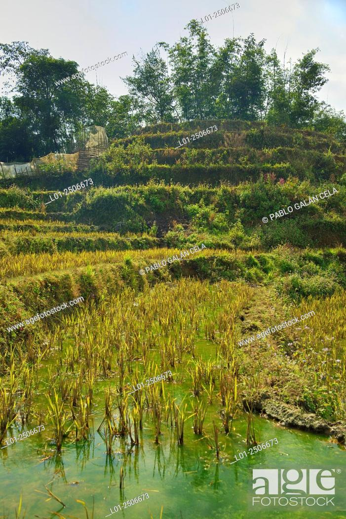 Imagen: Rice fields in the region of Lao Cai, Vietnam.
