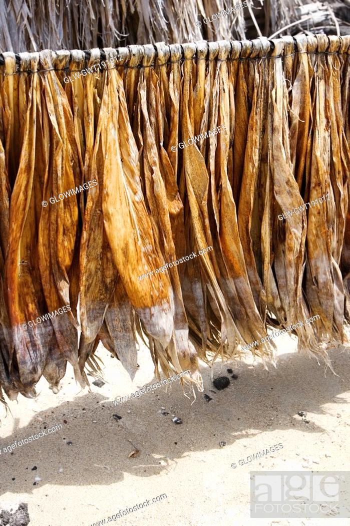 Stock Photo: Tobacco leaves drying, Kona, Big Island, Hawaii Islands, USA.