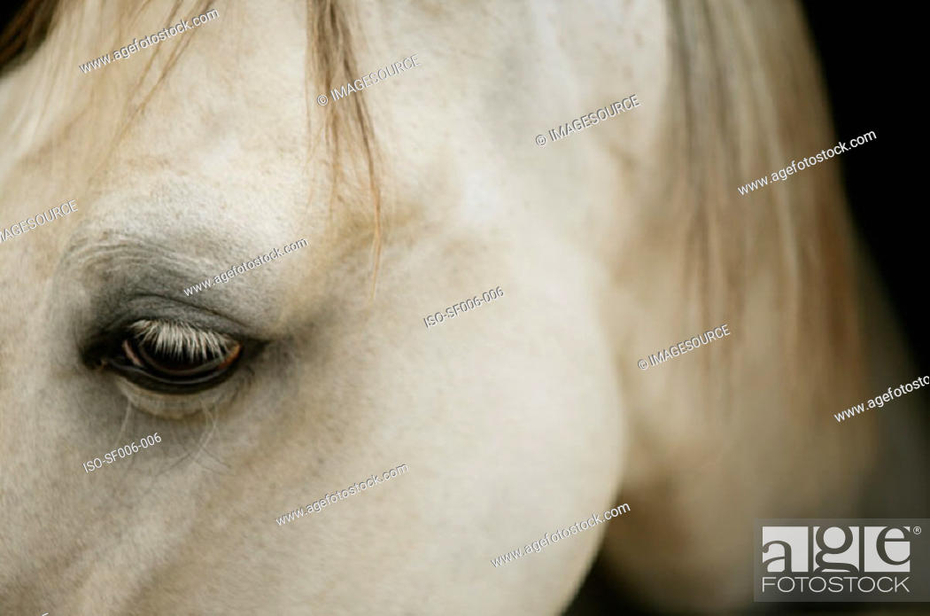 Stock Photo: Close-up of horse's head.