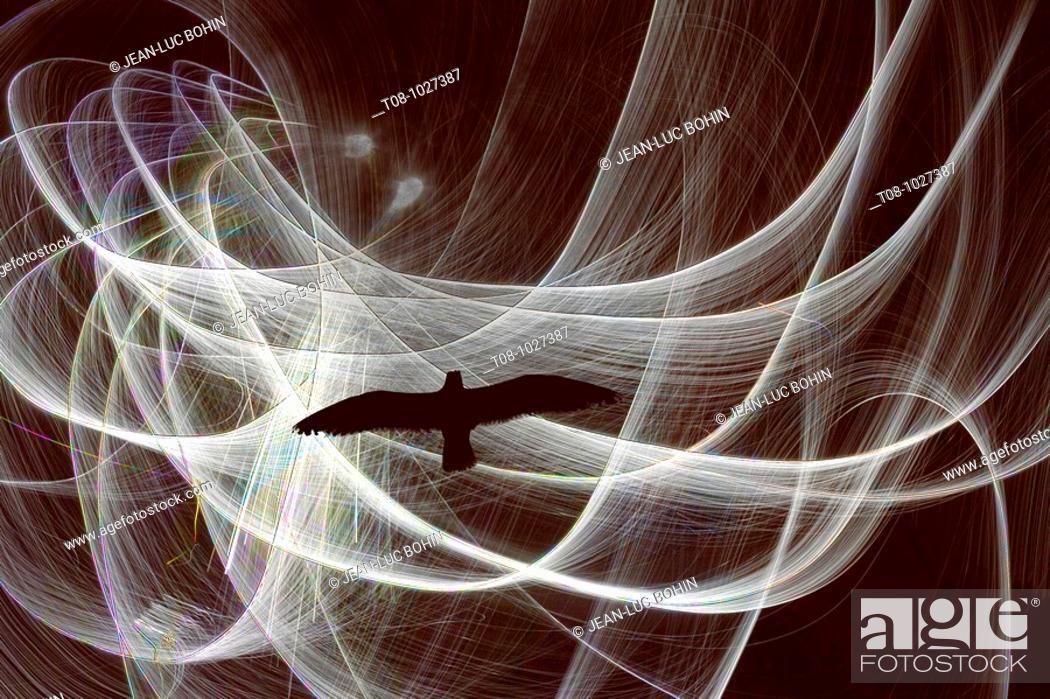 Stock Photo: bretagne,belle-île : goéland en vol sous les nuages.