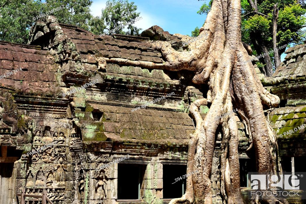 Stock Photo: Ta Prohm temple, Angkor Wat area, Siem Reap, Cambodia.