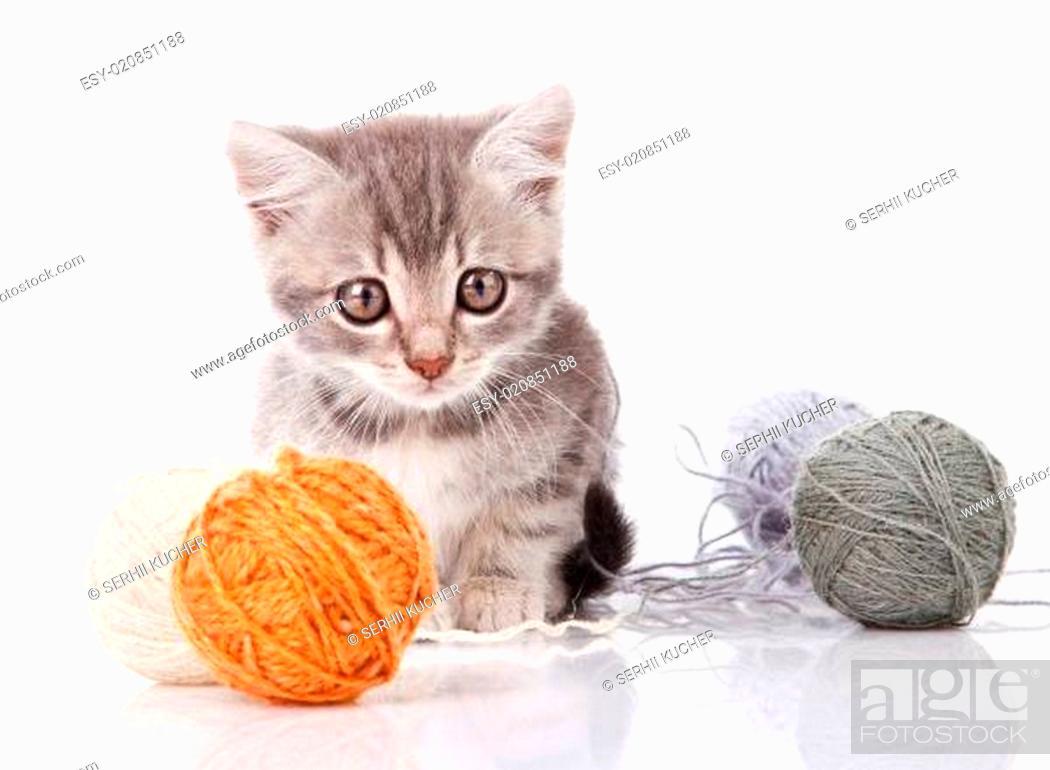 Stock Photo: cute gray kitten.
