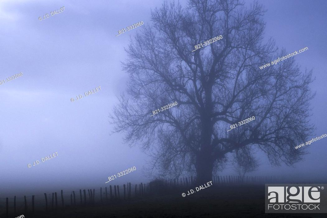 Stock Photo: France, Auvergne, Cantal, winter mist by Maurs.