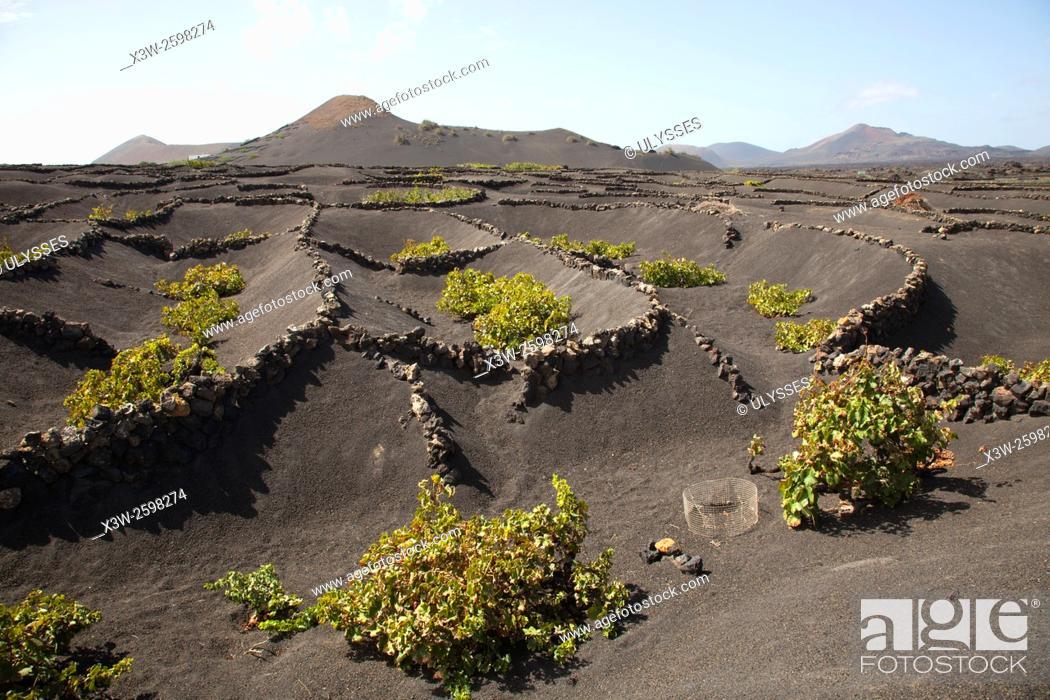 Stock Photo: La Geria area, Lanzarote island, Canary archipelago, Spain, Europe.