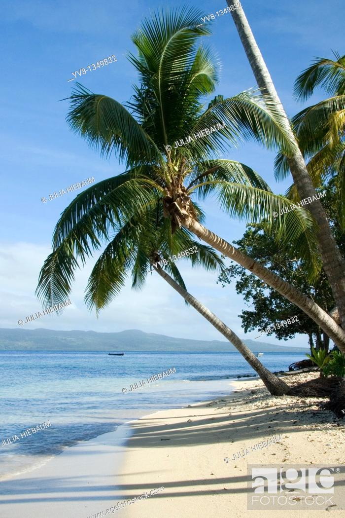 Stock Photo: Palm trees on Qamea beach, Fiji islands.