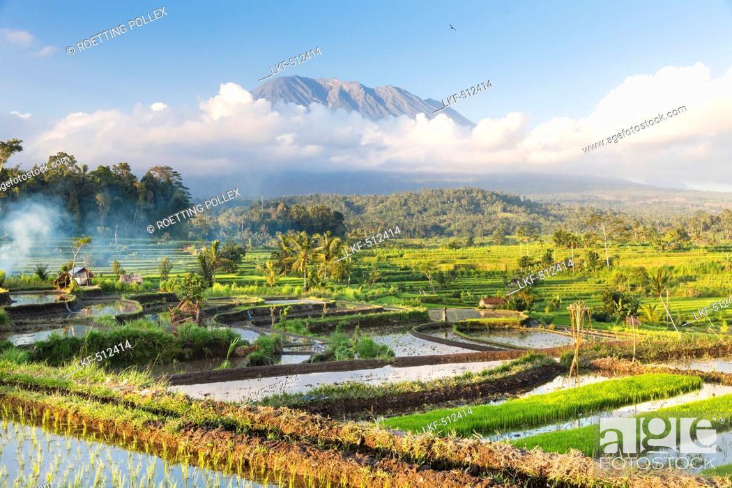 Tropical scenery with paddy fields, Gunung Agung, near