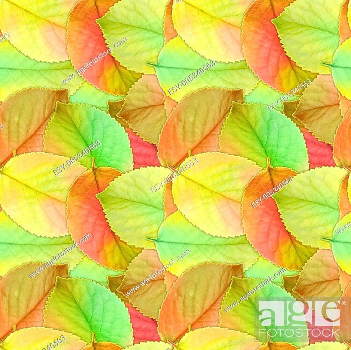 Stock Photo: Seamless background of autumn leafs.