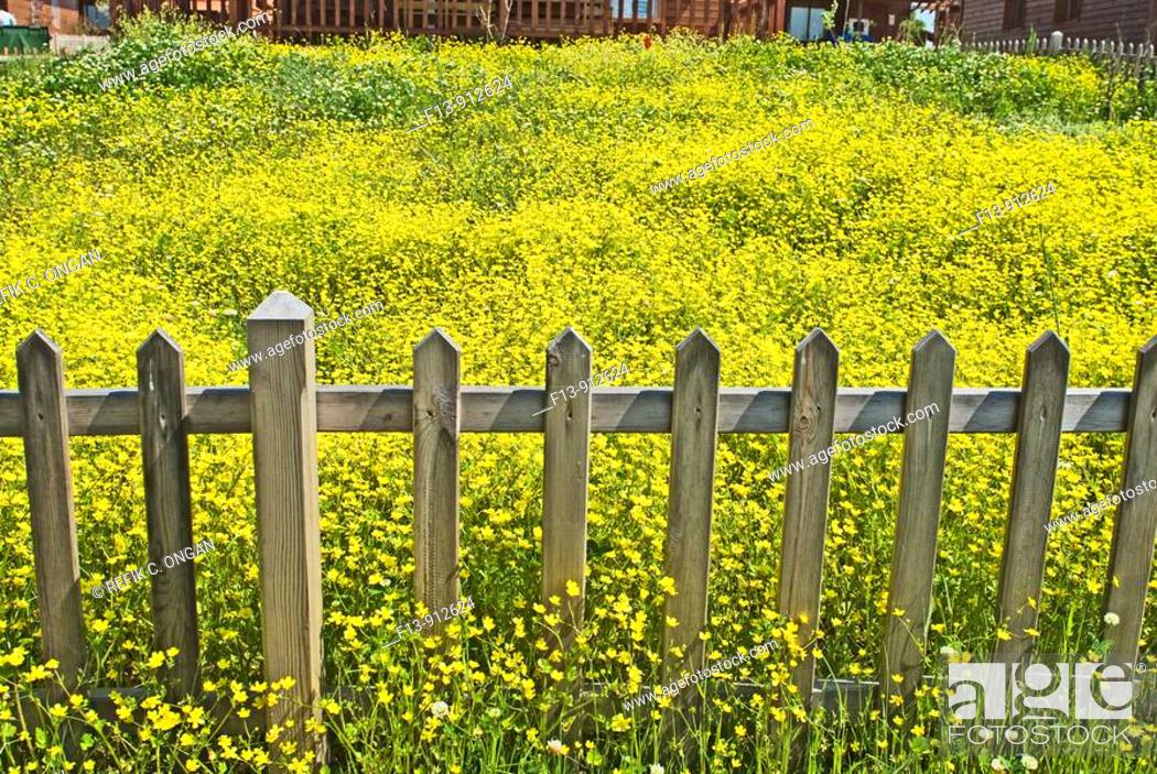 Stock Photo: garden with daisy.