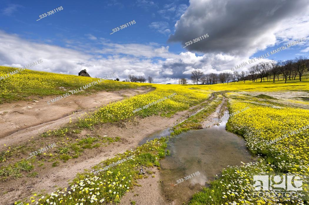 Imagen: Ruts and puddles in a path in the meadows on a spring day. Higuera de las Dueñas. Avila. Spain.
