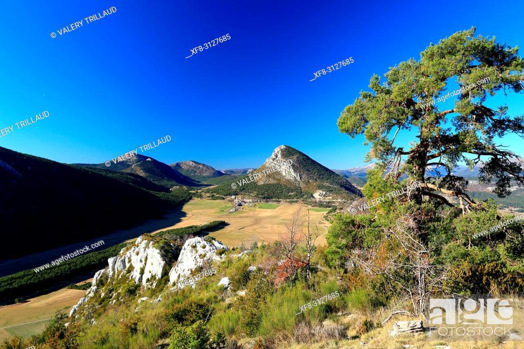 Stock Photo: Caille, Prealpes d'Azur, 06, Alpes-Maritimes, Cote d'azur, PACA, .